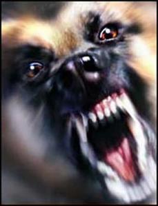 aggressive-dog_002